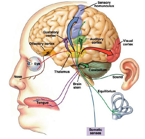 Alzheimer's Affects Perception -sensory stimulation is brain stimulation