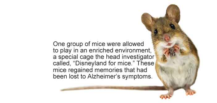 We May Be Able to Find Memories Lost to Alzheimer's