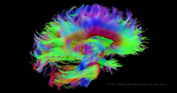 brain-plasticity_the-brain-initiative