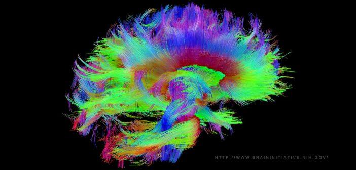 brain-plasticity_the-brain-initiative