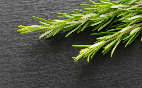 Aromatherapy for Alzheimer's - Rosemary for memory